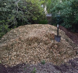 Pile of fresh wood chippings