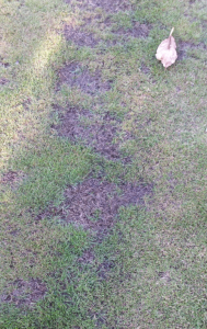 Dead grass on lour lawn