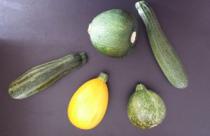 Courgette varieties from our garden