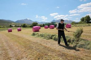Pink Bales_Irish Independent Dec 2016